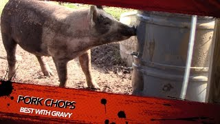 How To Build A Automatic Pig Waterer!