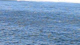 WOW!  1 Mile Long Bass Feeding Frenzy off Sandy Hook!!