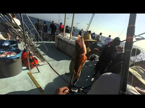 Newport Landing Sport Fishing 9/13/2014