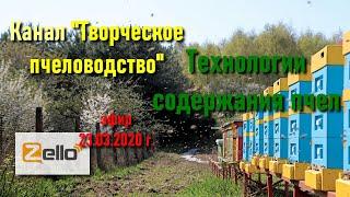 """23.03.20 г. Z-рация, канал """"Творческое пчеловодство"""", Технологии содержания пчел"""