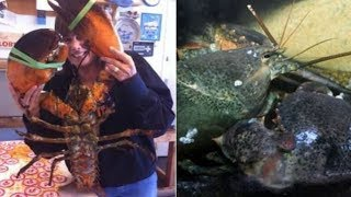 A Lobster Boat Hauled In This Monster Catch – And The Size Of Its Claws Left The Crew Shellshocked