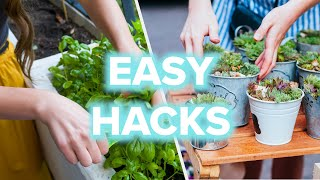 The Ultimate Guide To Growing Plants At Home
