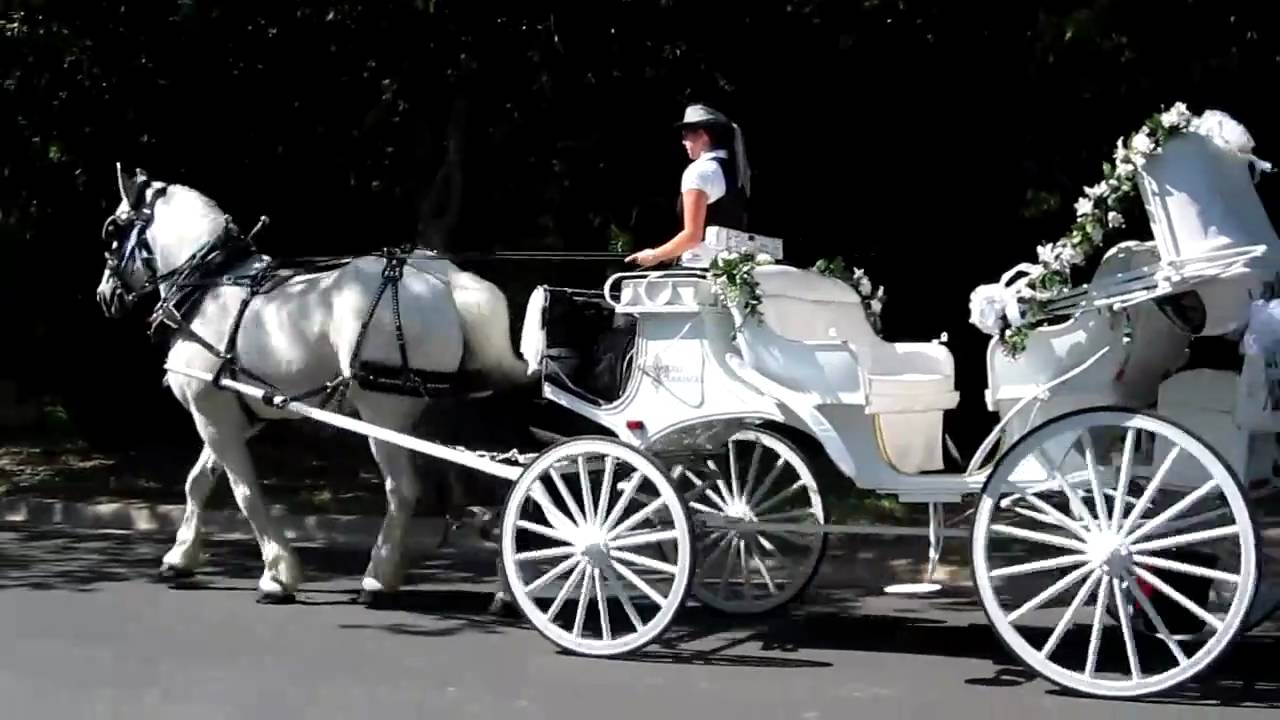 Angeli Carriages - white horse and carriage in Austin, TX ...