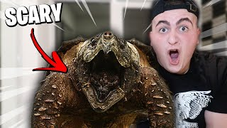NEW PET SCARIER THAN MY DARK WEB PIRANHA!! (SCARIEST PET I'VE EVER OWNED ALLIGATOR SNAPPING TURTLE!)