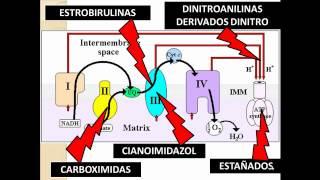 Video fungicidas II