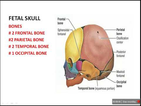 Fetal Skull And Pelvis Youtube