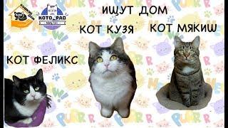 """Кот в добрые руки. Три кота из приюта """"Кошкин Дом"""", Санкт-Петербург Мякиш, Феликс и Кузя ищут дом."""