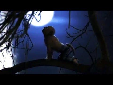 Alfie Der Kleine Werwolf