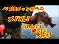 【海釣りルアーフィッシング】ベラ連チャンからの待望のメバル!!!