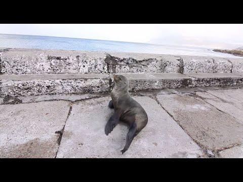 Kalk Bay Harbour Relaxation Music - Sleeping Music - Meditation Music