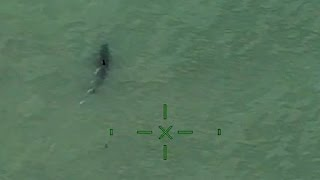Paddleboarders' shark scare