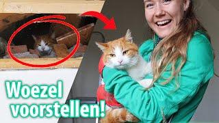 Kat Vast In Het Plafond & Slecht Nieuws Over De Bak...   Felinehoi VLOG #330