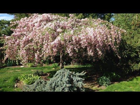 Trees: Take a Garden Tour for High Impact Garden Design!