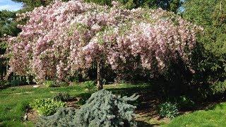 Gambar cover Trees: Take a Garden Tour for High Impact Garden Design!