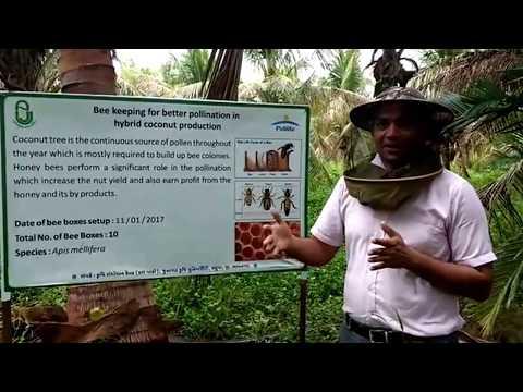 Pidilite - Horticulture Initiative - ARS - Honey Bee Breeding