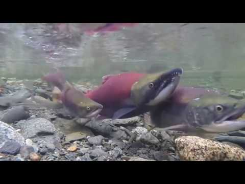 Best relax aquarium fish swimming beautiful fish relax for What is the fastest swimming fish