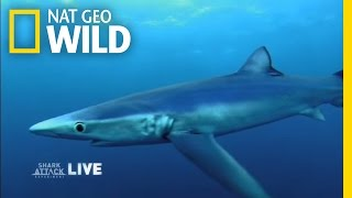 Sharks Need Our Protection | Shark Attack Experiment Live!