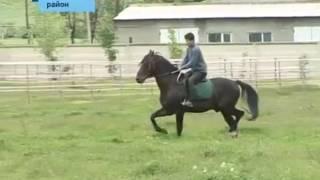 Кабардинская порода лошадей имеет большие перспективы.
