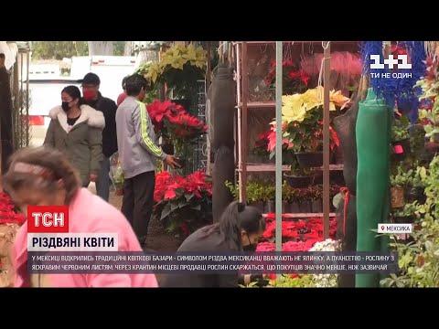 ТСН: У Мексиці перед Різдвом відкрились традиційні квіткові базари