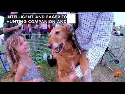 5  smartest dog breeds