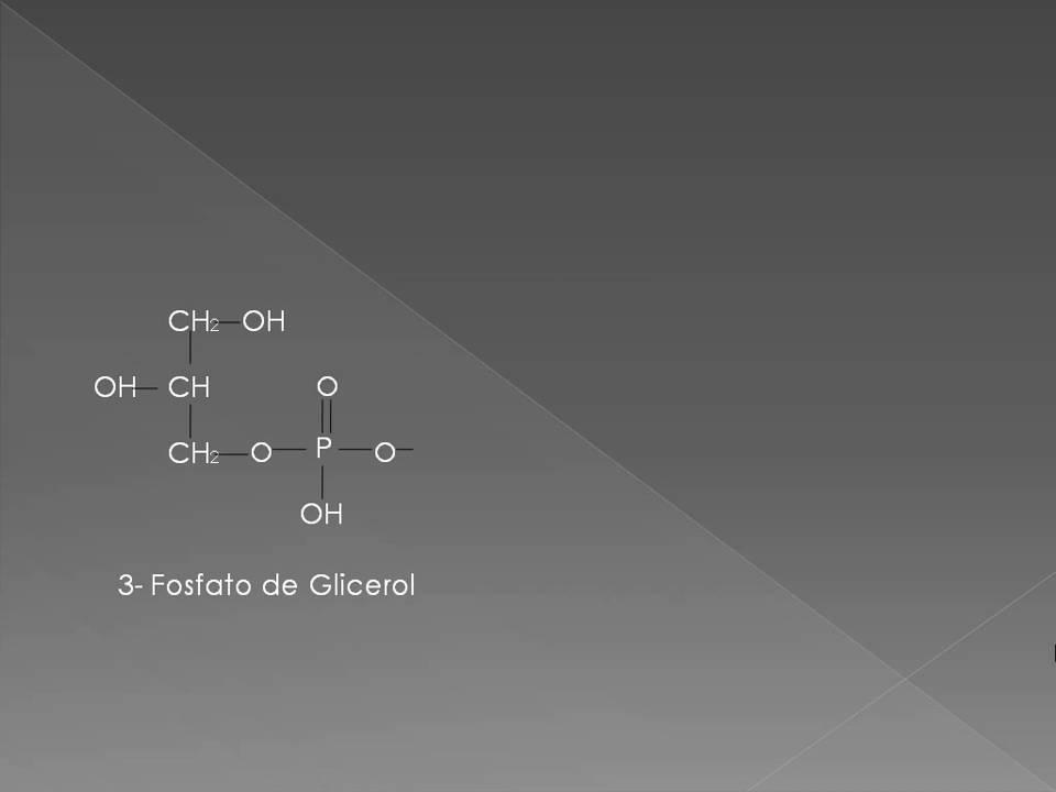 Glicerol fosfato lanzadera gluconeogénesis y diabetes