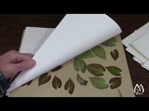 Part 1 | Peeking at Pressed Flowers | Flowers to Press | Results of Pressing Flowers