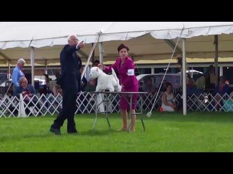 Columbia Terrier Association Of Maryland - Westie - Lotrando Sunshine Celebration