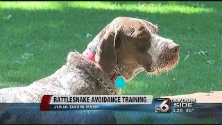 Beware Dog Owners: It's Snake Season In The Foothills