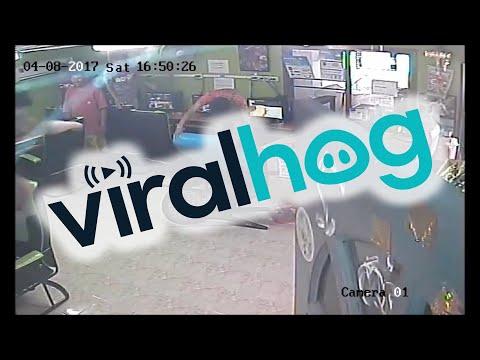 Feisty Snake Slithers into Internet Cafe