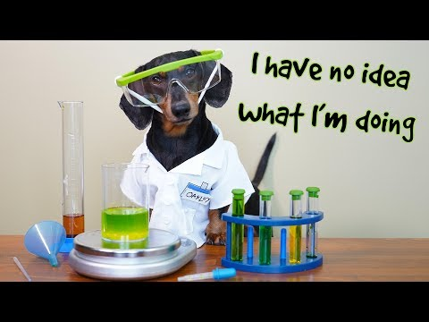 Dachshund enjoys doing chemistry experiments in his little laboratory