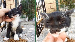 Little black kitten with very sweet beautiful eyes. (Cute kitten videos)