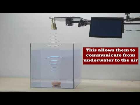 Wireless Communication Breaks Through Water-air Barrier