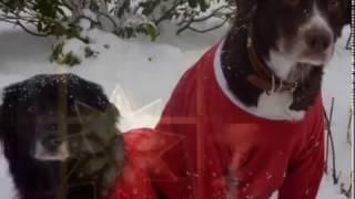 Julens Bud  - Melodi, tekst, komp, video og vokal (begge stemmer): Per Gunnar Alfheim