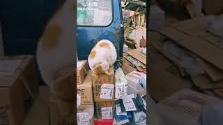 Cat Series: When you are sleeping at work