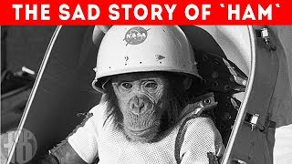 What Happened to the First Monkey in Space?