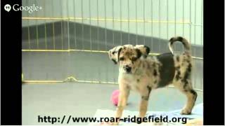 Dog Adoption Ct Ridgefield Operation For Animal Rescue Dog Adoption Ct
