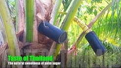 Taste of Thailand - The natural sweetness of palm sugar
