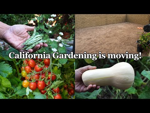 Important Announcement From California Gardening + Summer Vegetable Harvests