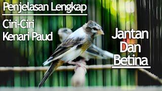 CARA MEMBEDAKAN KENARI PAUD JANTAN DAN BETINA - CANARY BIRD