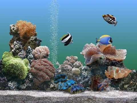 Windows XP Plus! - Aquarium Screen Saver