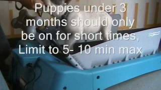 Dog Training Tips: How To Train Your  Puppy On A Treadmill