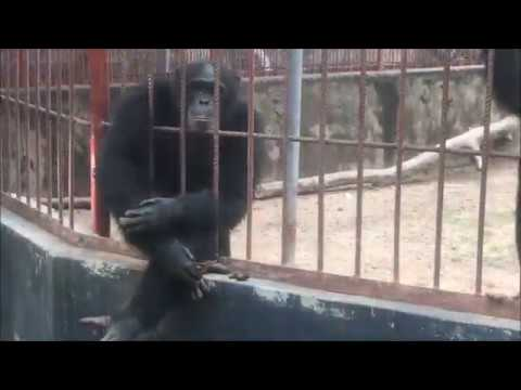 University of Ilorin Zoo
