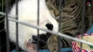Bezdomne zwierzęta też chcą  przetrwać zimę. Jak im pomóc?