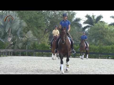 Dressage Farm Wellington, Florida
