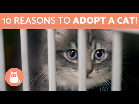 Why you should adopt a cat -  Top 10 reasons to adopt a cat!