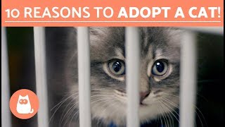 Why you should adopt a cat   Top 10 reasons to adopt a cat!