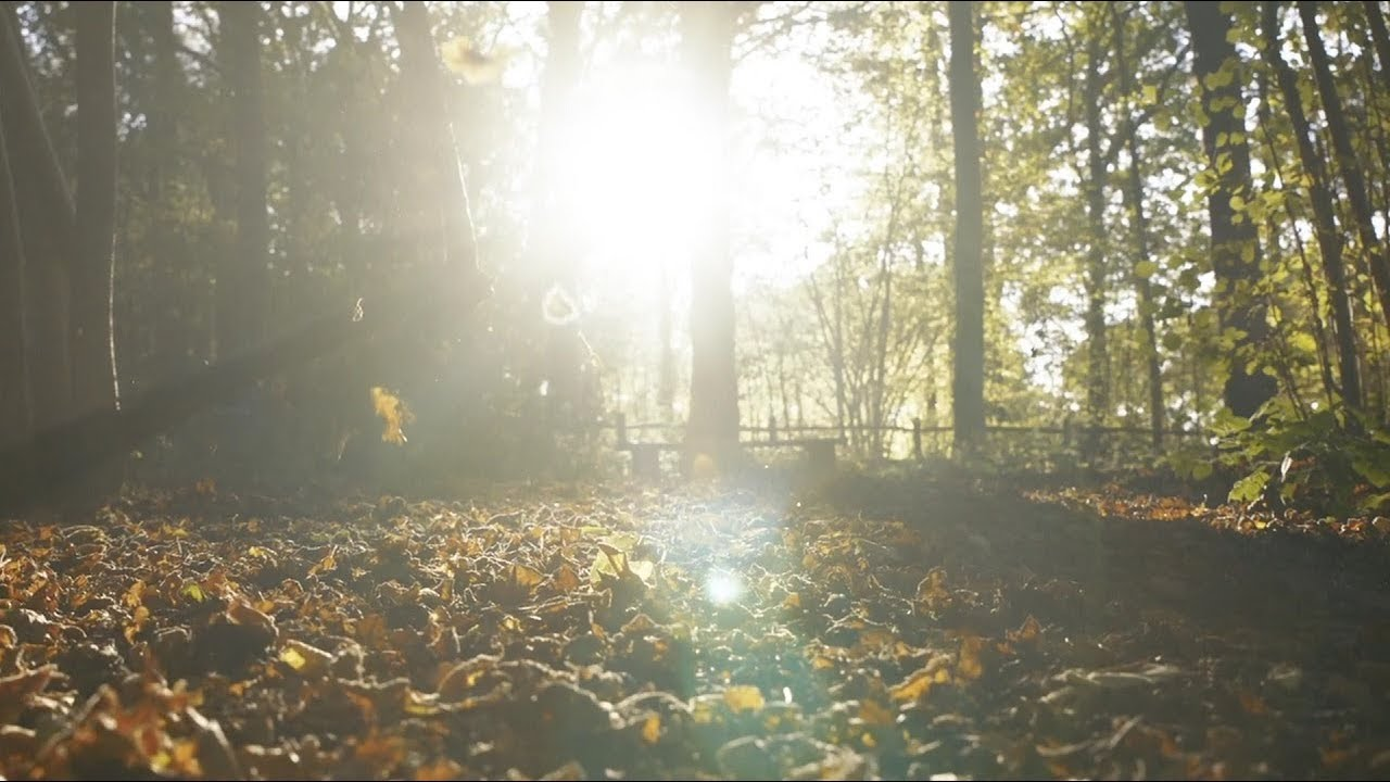 Autumn Leaves (official video) – Eva Cassidy & the London Symphony Orchestra