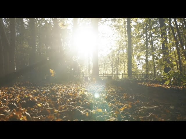 Autumn Leaves (official video) - Eva Cassidy & the London Symphony Orchestra