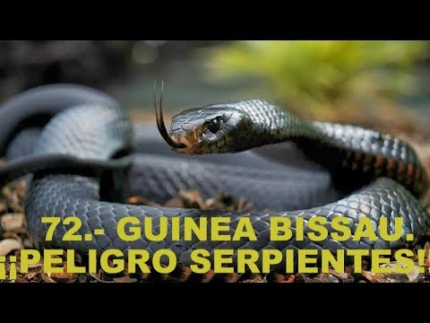 72.- GUINEA BISSAU. ¡¡PELIGRO SERPIENTES!! (DOS BICIS SIN DESTINO)