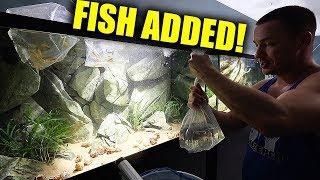 new-fish-added-to-the-aquarium